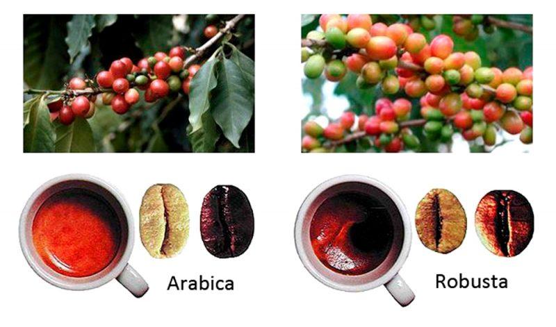 кофейные зерна e1512319267521 - Кофе в зернах. Выбираем на свой вкус