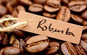 кофе робуста 300x190 - Кофе в зернах. Выбираем на свой вкус
