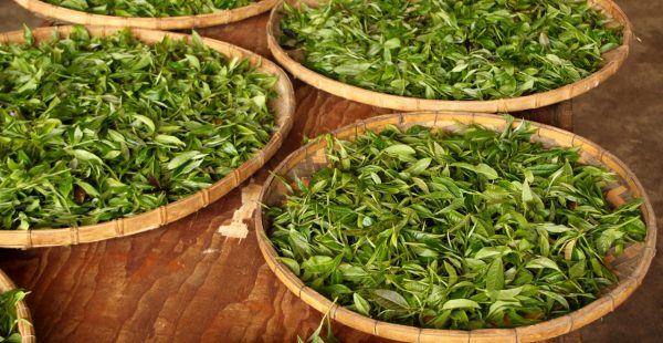 «Устранение зелени» e1512393463657 - Виды зеленого чая - палитра вкусов и ароматов!