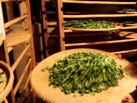 Встряхивание и просеивание чая - Виды зеленого чая - палитра вкусов и ароматов!