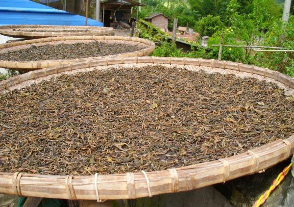 подсушивание чая e1512393508216 - Виды зеленого чая - палитра вкусов и ароматов!