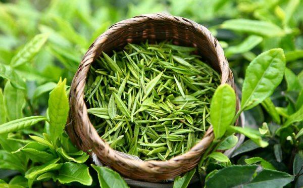сорта зеленого чая e1512393544620 - Виды зеленого чая - палитра вкусов и ароматов!