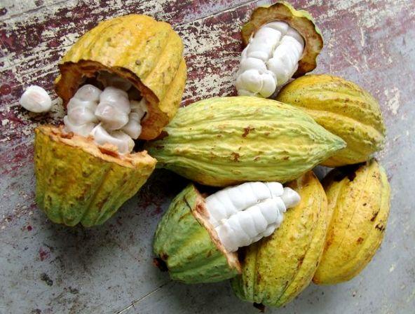 какао бобов - Масло какао - применение для лица и тела!