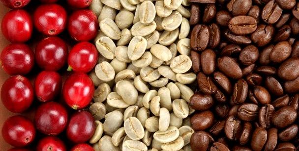 обработка кофе - Кофейные профессии – с дерева в чашку!